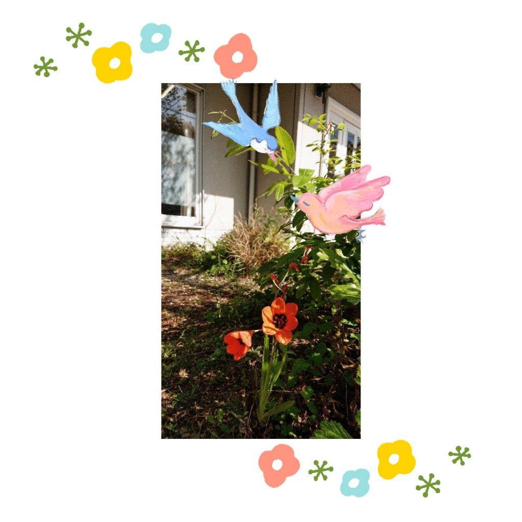 deco_2019-04-20_09-14-56